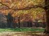 bosco castagni